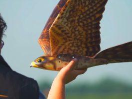 robird