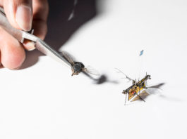 Flying Robotic insect Review